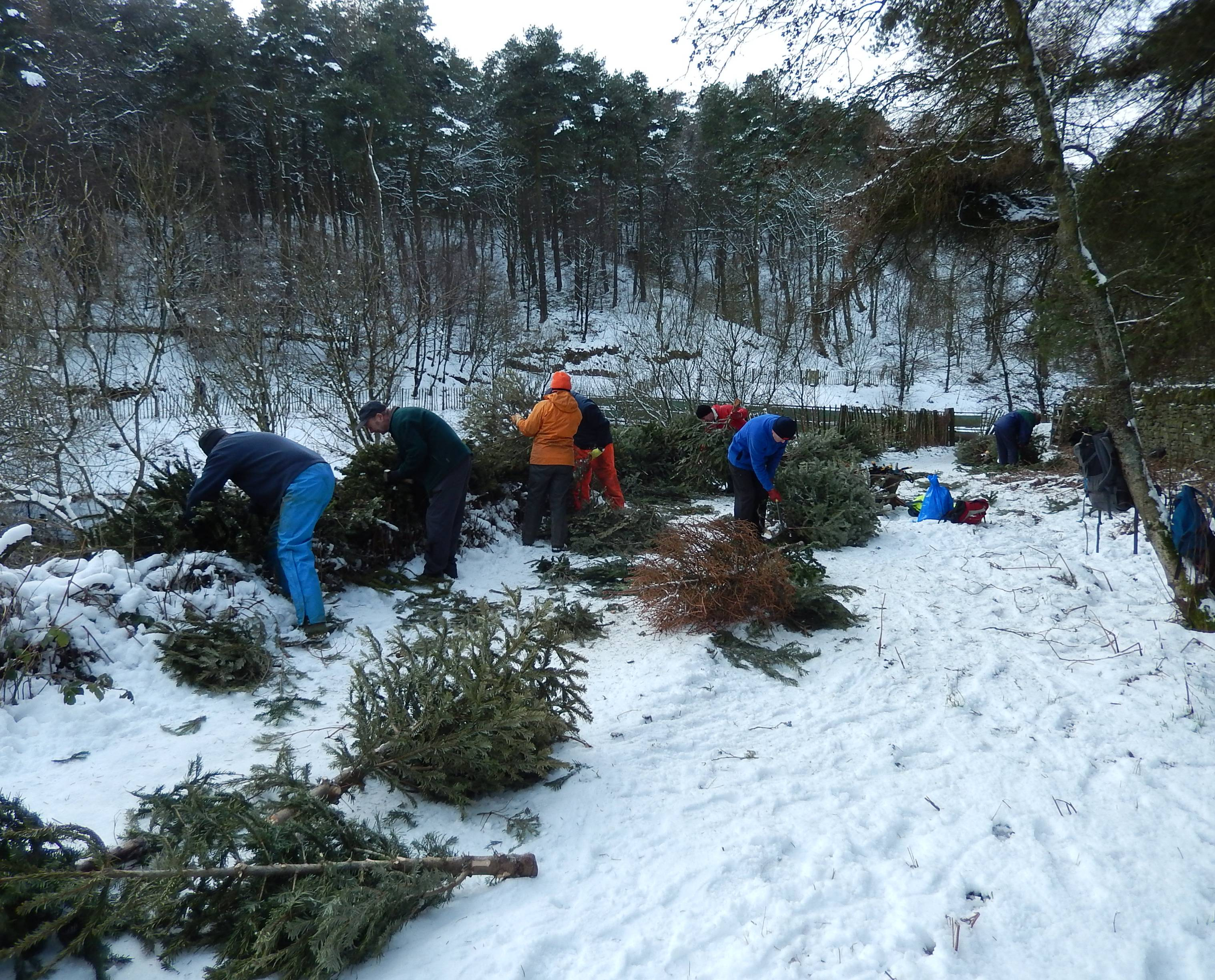 Christmas tree recycling at Ogden in 2014