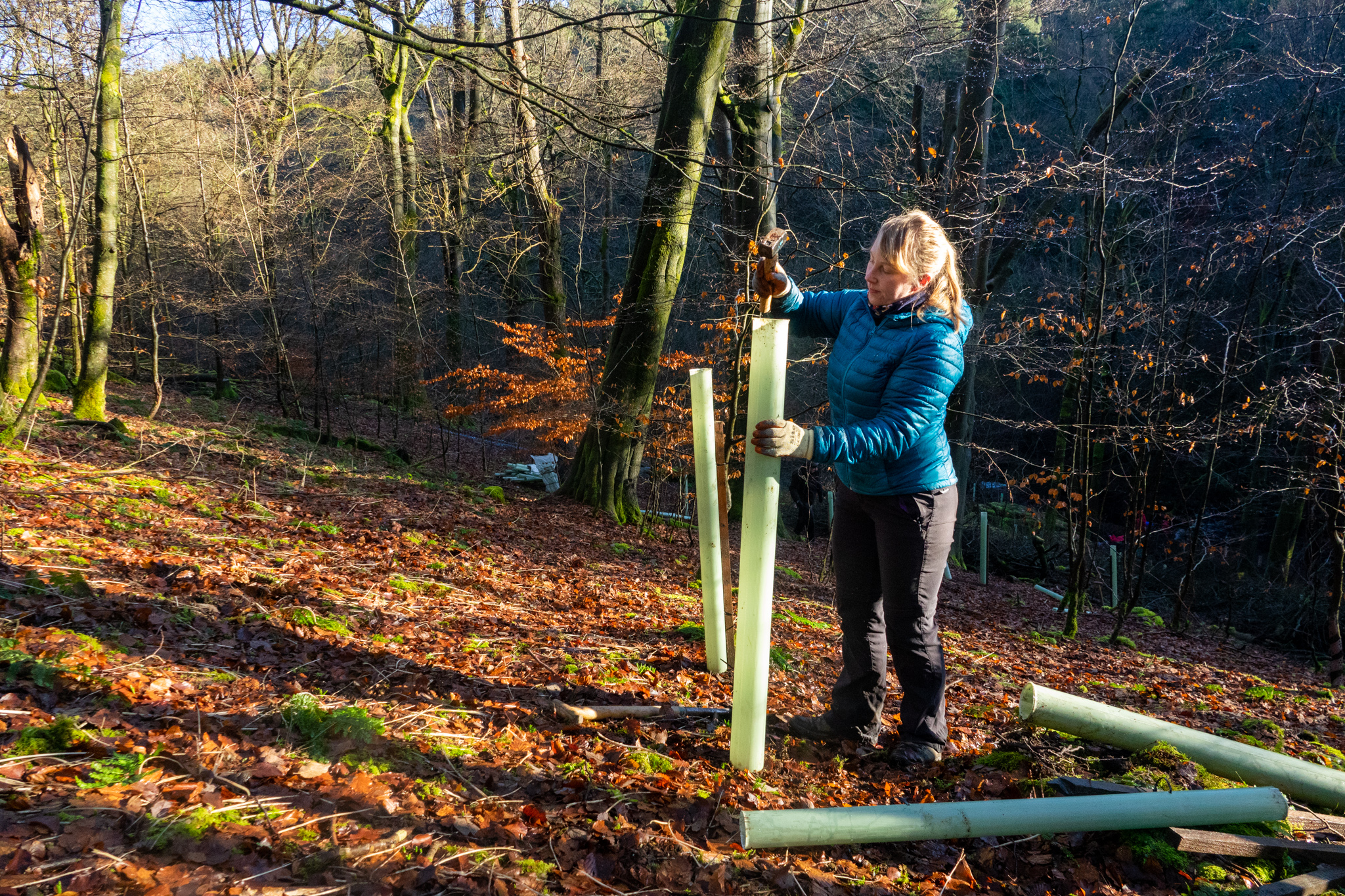 Hardcastle Crags tree planting